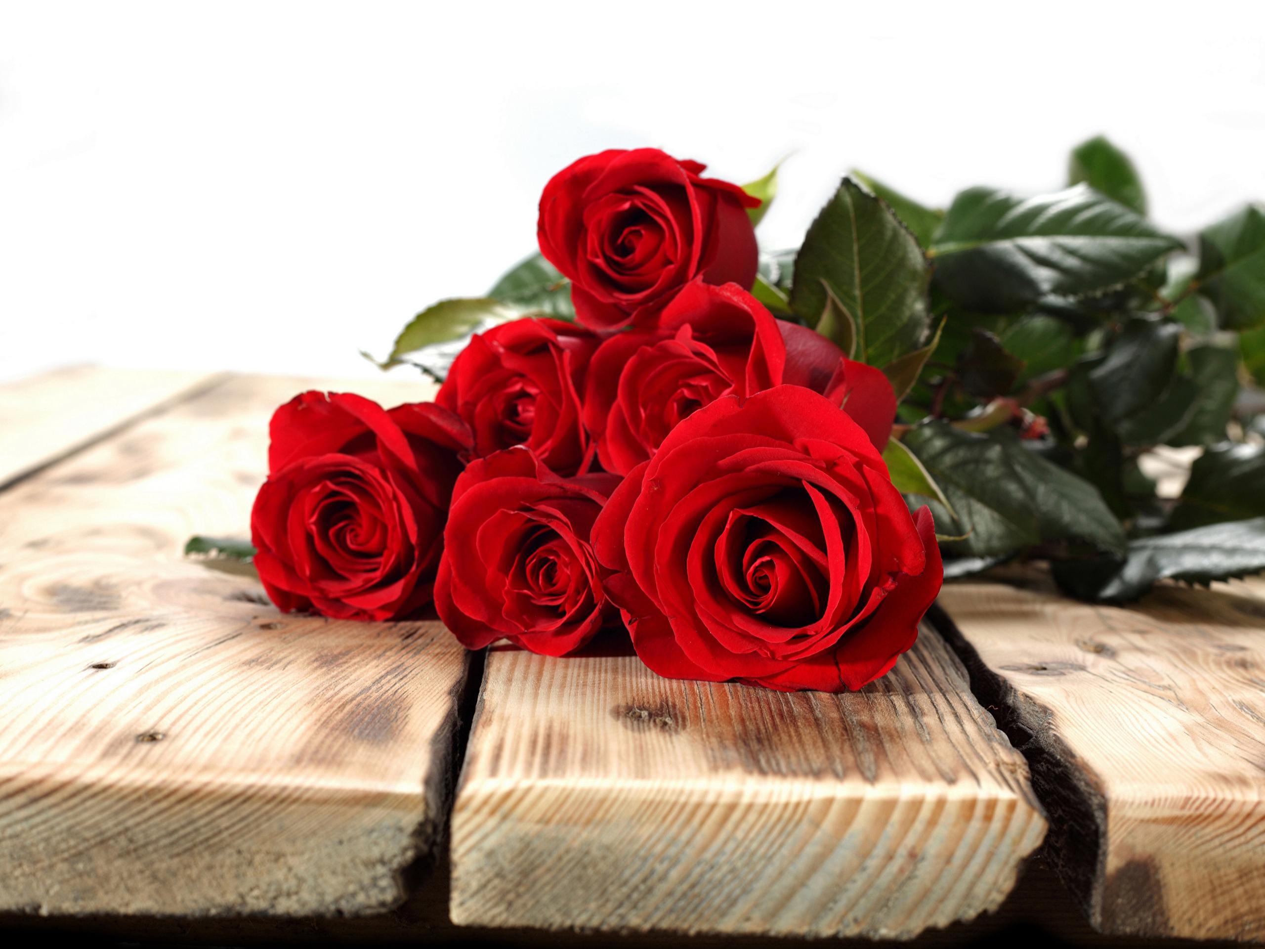 цветы букет розы скамейка природа скачать