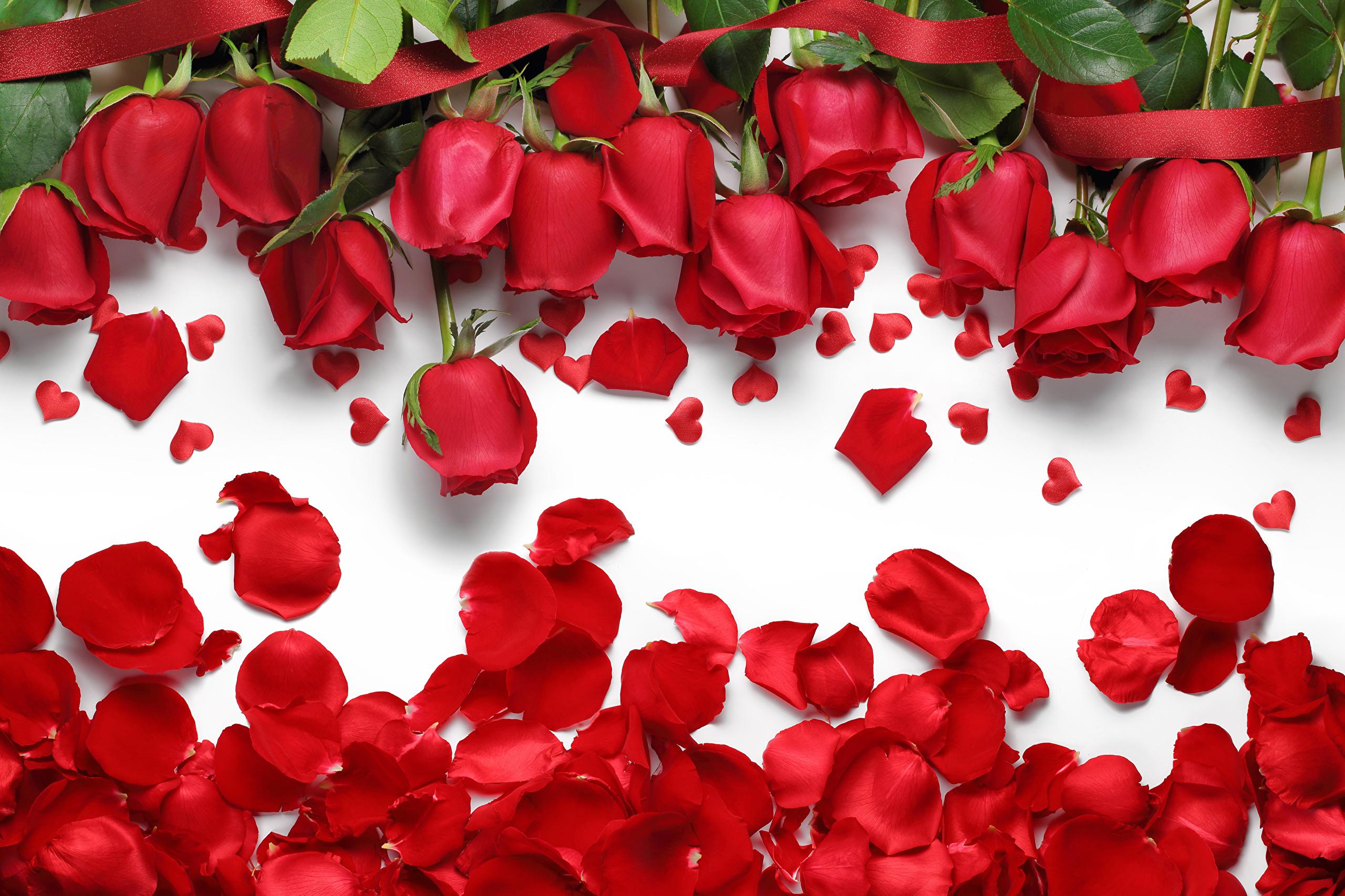Сердце из лепестков белых роз бесплатно