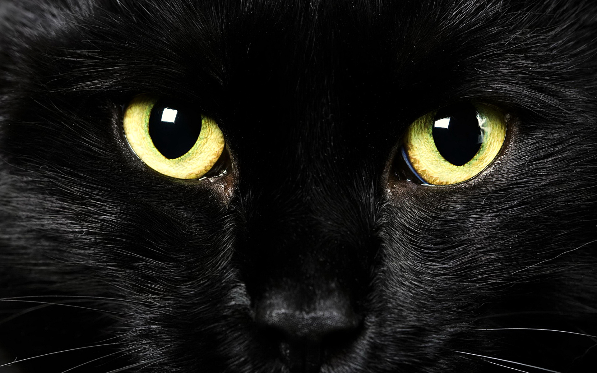 кот с бирюзовыми глазами бесплатно