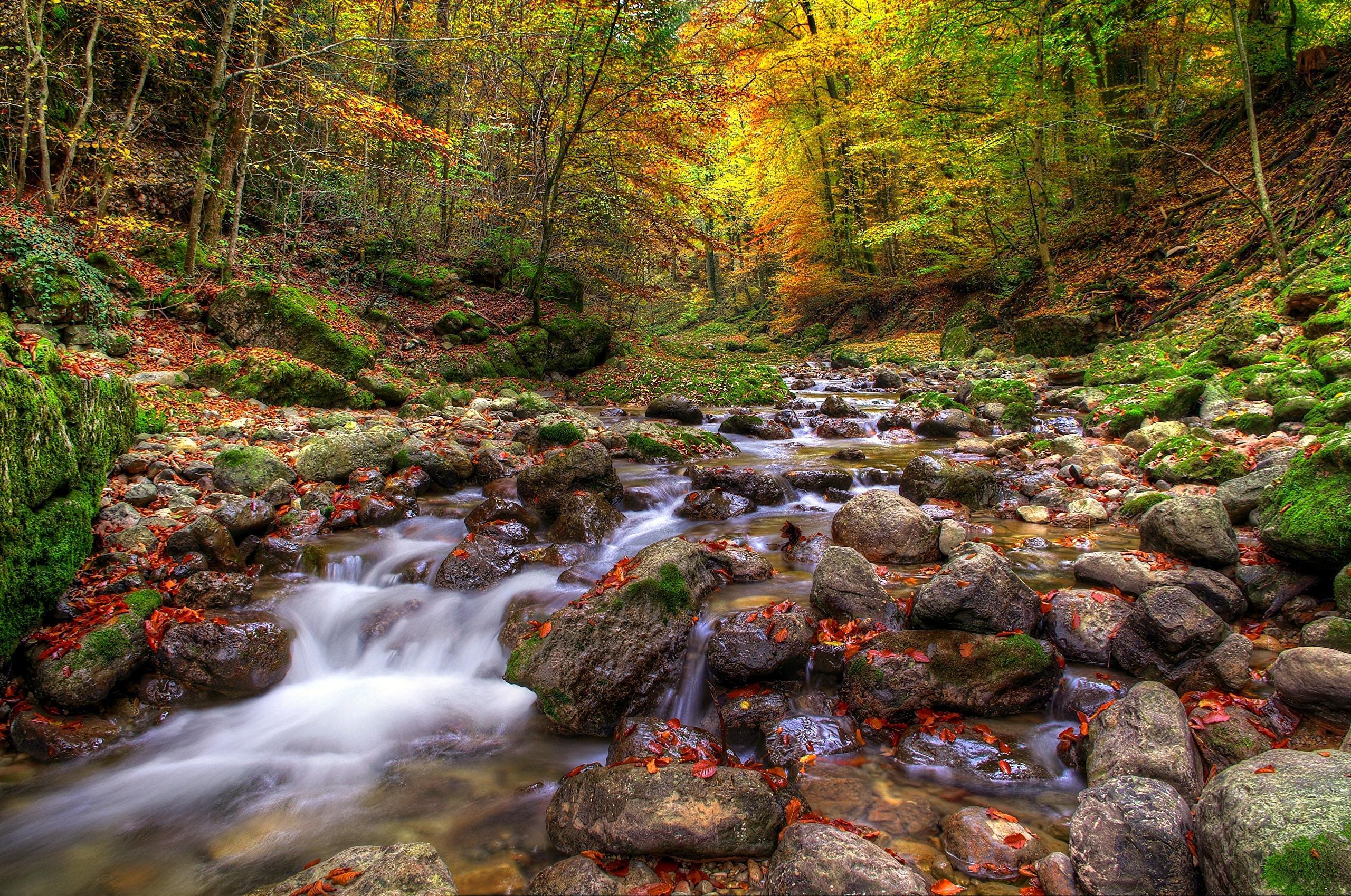 природа водопад деревья листья вода река бесплатно