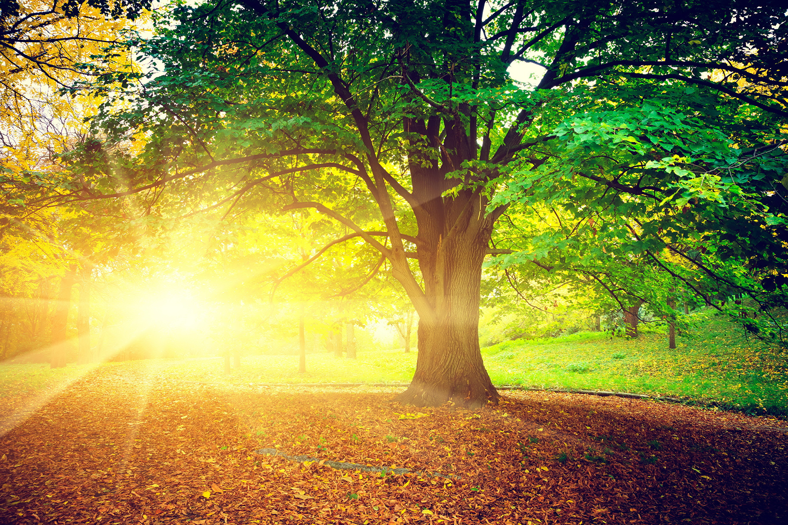 Осень лучи деревья скачать