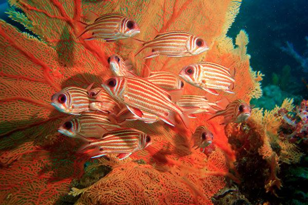 Фотографии Рыбы Squirrelfish животное 600x400 Животные