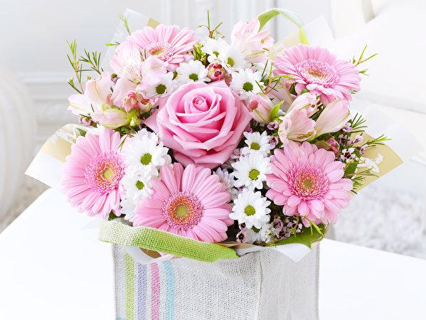 обои для рабочего стола Цветы Хризантемы