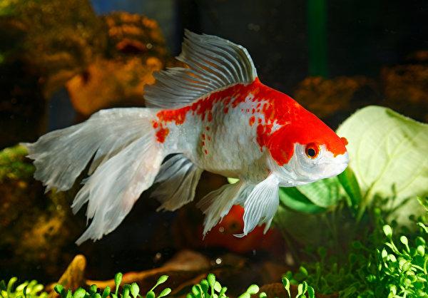 Фото Рыбы животное 600x418 Животные