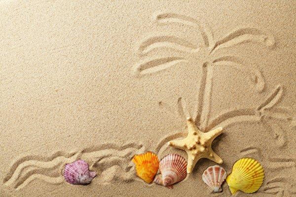 Картинки Морские звезды песка Ракушки 600x400 Песок песке