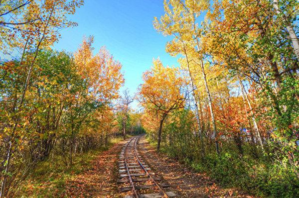 Фото Осень Природа Леса Железные дороги Деревья 600x398 осенние лес дерево дерева деревьев