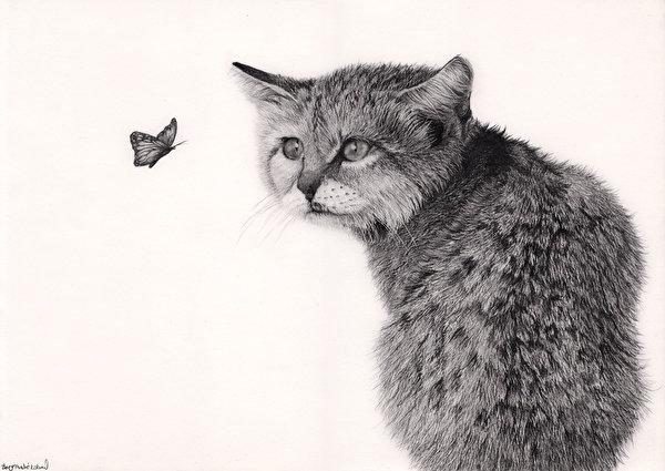 Фотография Кошки Бабочки Черно белое Животные белом фоне Рисованные 600x425 кот коты кошка бабочка черно белые животное Белый фон белым фоном
