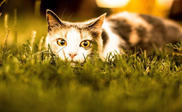 коты взгляд фото