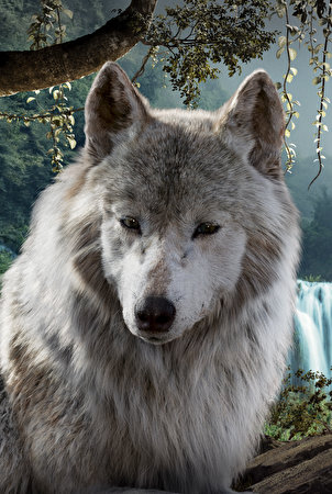 Смотреть волки картинки