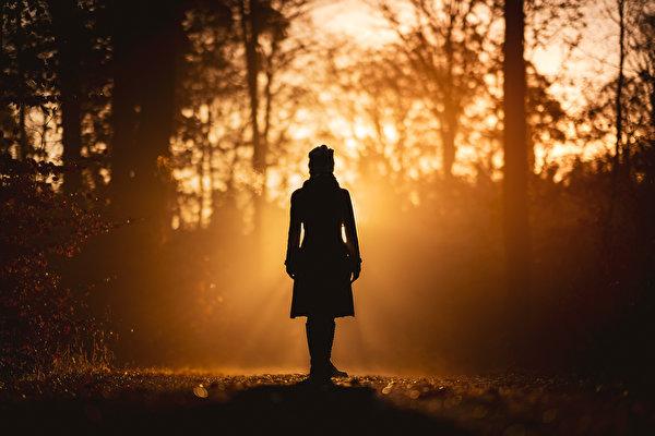 Фото силуэта Природа Девушки лес Утро дерево 600x400 Силуэт силуэты девушка молодая женщина молодые женщины Леса дерева Деревья деревьев