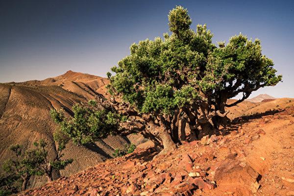 Картинка Африка Марокко Toufrine, Tadla-Azilal Природа Камень дерева 600x400 Камни дерево Деревья деревьев