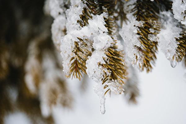 Фотография боке льда Ель Природа Снег Ветки 600x400 Размытый фон Лед ели снега снегу снеге ветвь ветка на ветке
