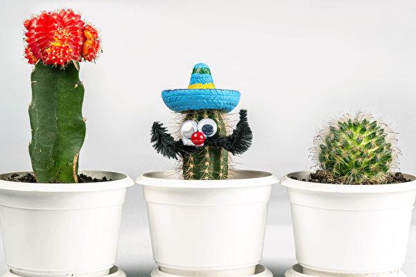 Фотографии шляпы Цветочный горшок Цветы оригинальные Трое 3 Кактусы Белый фон 600x400 Шляпа шляпе цветок Креатив креативные три втроем белом фоне белым фоном