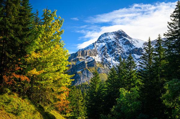 Картинка альп Швейцария Gryon Горы Осень Природа дерева 600x399 Альпы гора осенние дерево Деревья деревьев