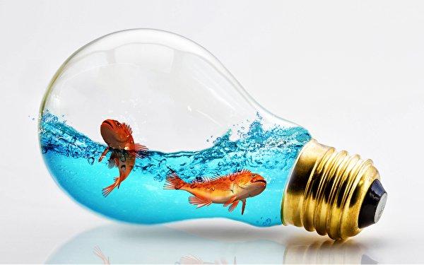 Фото Рыбы лампа накаливания Креатив воде животное Серый фон 600x375 Лампочка креативные оригинальные Вода Животные сером фоне