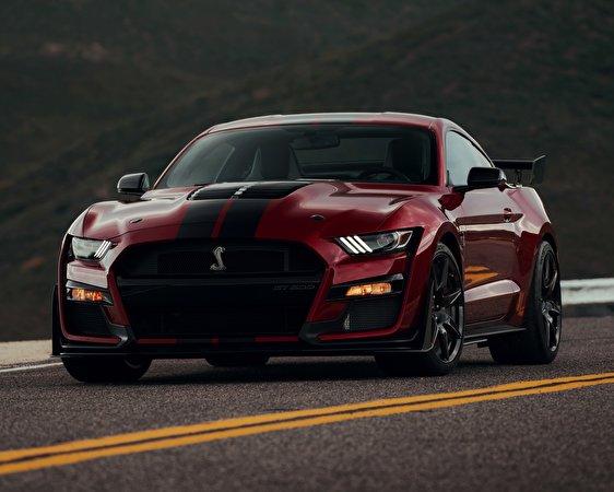Фотография Ford Mustang Shelby GT500 2019 Бордовый Спереди автомобиль 562x450 Форд бордовая бордовые темно красный авто машины машина Автомобили