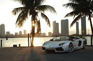 Картинки Lamborghini Белый Кабриолет Пальмы Дорогие Родстер 2012 Aventador LP700-4 roadster Города
