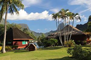 Обои Дома Пальмы Трава Газон Бунгало French Polynesia город