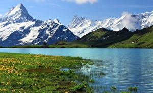 Обои Гора Швейцария Речка Пейзаж Берн Траве Grindelwald Природа
