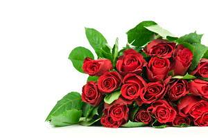Фото Роза Букет Красная Листва Цветы