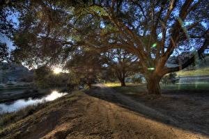 Картинка Пейзаж США Дороги Калифорния Малибу Лучи света Дерева HDRI Природа