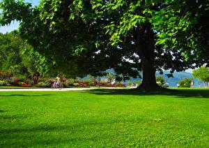 Картинки Парки Австрия Трава Деревьев Зеленая Листва Carinthia Klagenfurt Природа Города