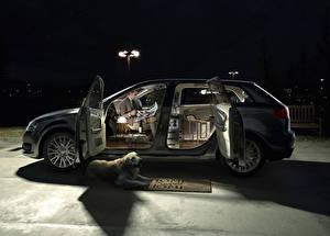 Картинка Креативные Собаки Ночь Ретривера Автомобили
