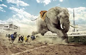 Обои Креативные Слоны Собаки Бег Борзые Грейхаунд гонка Юмор