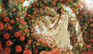 Фотография Роза Много Платья цветок Девушки