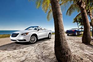 Обои Chrysler Серебряная Кабриолет Песке Пальмы Ствол дерева 2011 200 convertible Природа