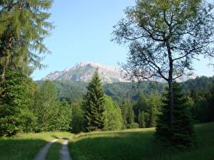 Фотографии Пейзаж Швейцария Дороги Гора Лето Траве Дерево Ель Lucerne Kriens Природа