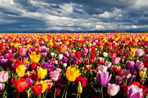Обои Много Цветы