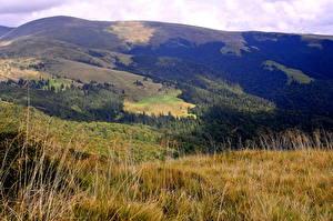 Обои Пейзаж Украина Горы Трава Закарпатье Близница