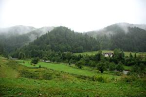 Фотография Пейзаж Украина Горы Трава Карпаты