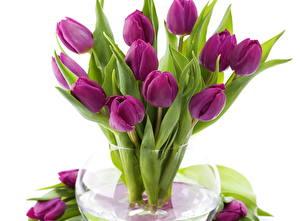 Фотографии Тюльпаны Фиолетовые Лист Ваза цветок