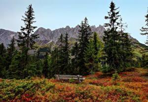 Фото Пейзаж Горы Деревьев Ель Скамья Альп Austrian Природа