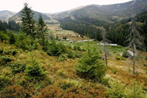 Фото Пейзаж Украина Горы Трава Деревья Ель Закарпатье Догяска