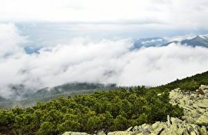 Фотография Пейзаж Украина Закарпатье Облака Природа