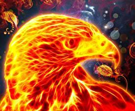 Фотографии Огонь Птицы Орлы Голова Клюв