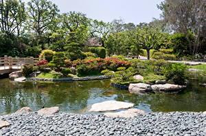 Обои Сады США Пруд Ландшафт Калифорния Дизайн Earl Burns Miller Japanese Природа фото