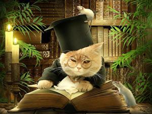 Фотография Коты Креатив Шляпа Очки Книга Библиотека Смешные