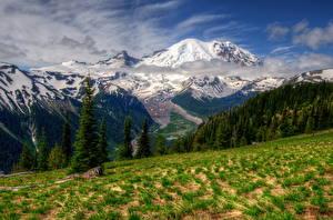 Картинка Парки Горы Пейзаж США Вашингтон Траве HDRI Маунт-Рейнир парк