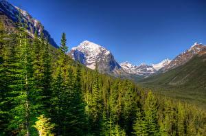 Фотография Парк Канада Леса Пейзаж Горы Дерева Ель Джаспер парк Природа