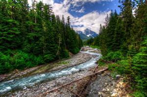 Обои Парки Речка Леса Пейзаж США HDR Маунт-Рейнир парк White