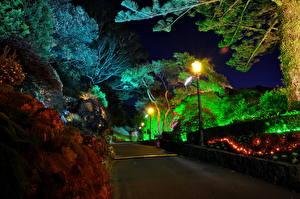 Фотографии Сады Дороги Новая Зеландия Ночные Уличные фонари Wellington Botanical Природа