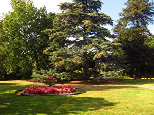 Картинки Сады Англия Газон Beale Arboretum Barnet Природа