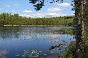 Фотографии Речка Леса Россия Выборг Природа