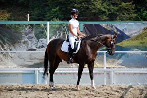 Фотографии Лошадь Конный спорт Спорт Девушки