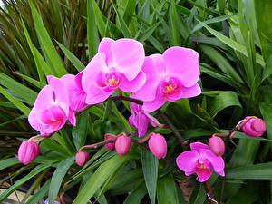 Картинка Орхидея Фиолетовые Цветы