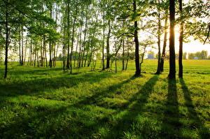 Картинки Времена года Лето Трава Дерево Зеленый Природа